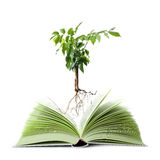 Livre vert Image libre de droits