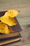 Livres avec des feuilles Photographie stock libre de droits