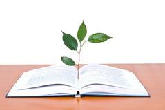 Livres et arbre Photographie stock