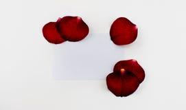 Livro Branco com folhas das rosas Imagem de Stock Royalty Free