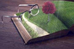 Livro com árvore e os monóculos vermelhos imagens de stock royalty free