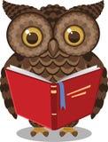 Livro de leitura da coruja Imagens de Stock Royalty Free