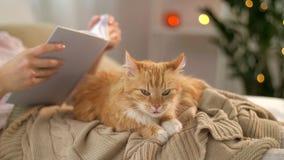 Livro de leitura vermelho do gato e da mulher de gato malhado em casa vídeos de arquivo