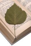 Livro de receitas velho e folha seca fotografia de stock royalty free