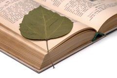 Livro de receitas velho e folha seca fotografia de stock