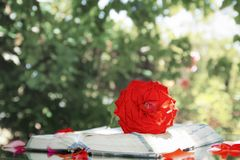 Livro do amor Imagem de Stock