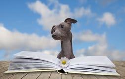 Livro e cão Imagens de Stock
