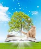 Livro mágico Fotos de Stock Royalty Free