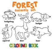 Livro para colorir dos animais da floresta Fotografia de Stock
