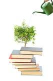 Livros e potenciômetro molhando imagem de stock royalty free