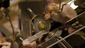 Livsmedelsförädlingfabrik, fegt kött stock video