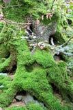 Livsmiljö för trädstubbe Royaltyfria Foton