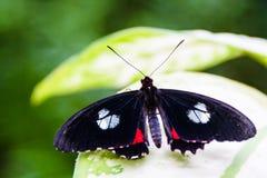Livsmiljön av den Benalmadena fjärilen parkerar 1 Royaltyfria Foton