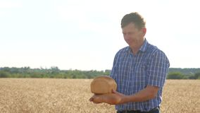 livsstil vete för tid för agriculturistfältskörd lyckat för trädgårds- tree för tid jordningsskörd för äpple mogen arkivfilmer