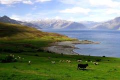 livstid för land 4 New Zealand Arkivfoto