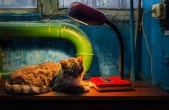 1 livstid fortfarande Lampa och katt royaltyfri bild