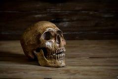 1 livstid fortfarande Skalle som vilar på det gamla trägolvet Arkivbilder
