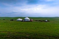 livstid mongolia Royaltyfri Bild
