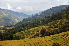 livstid nepal Arkivbilder