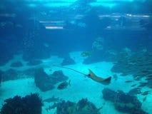 livstid under vatten Royaltyfri Bild