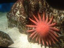 livstid under vatten Arkivbild