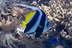 livstid undersea Fotografering för Bildbyråer