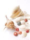 livstidshavet shells fortfarande Arkivfoto