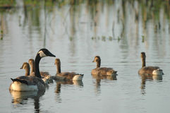 livstidsvåtmarker Royaltyfri Fotografi