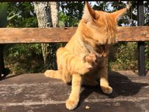 Livstil av katten Arkivfoto