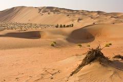 Liwa oas, Abu Dhabi Royaltyfri Bild