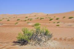 Liwa sand dunes Stock Photography
