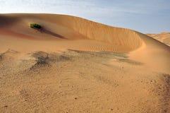 Liwa sanddyn & krusningar Arkivbild