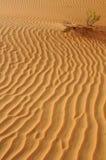 Liwa sandkrusningar Arkivfoto