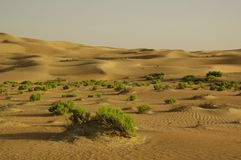 Liwa Sands Stock Images