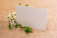 Śliwka kwitnie kartka z pozdrowieniami Zdjęcie Stock