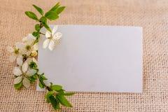 Śliwka kwitnie kartka z pozdrowieniami Zdjęcia Stock