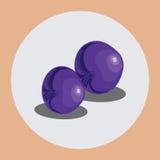 śliwki purpurowe ilustracja wektor