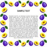 Śliwki rama z tekstem Zdjęcia Royalty Free