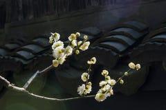 Śliwkowi kwiaty Obrazy Stock