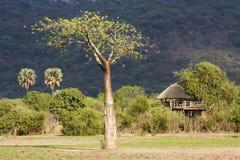 Liwonde. Baobab and game boma next to the Liwonde National park - Malawi Royalty Free Stock Image
