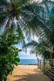 Lixe o trajeto na praia com palmeira verde e o mar azul | fundo natural do verão em Tailândia Imagens de Stock Royalty Free