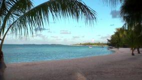 Lixe a praia e as palmeiras no fundo do oceano dos azuis celestes vídeos de arquivo