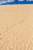 Lixe testes padrões após o vento na reserva natural, parque natural, Corralejo, Fuerteventura Fotos de Stock Royalty Free