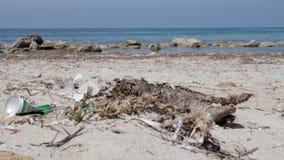 Lixo da lata e do papel de soda no Sandy Beach Mar no fundo vídeos de arquivo