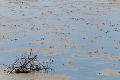 Lixo do mar e a maré baixa Imagem de Stock