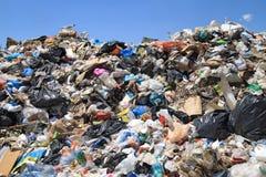 Lixo e gaivotas Imagens de Stock Royalty Free