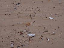 Lixo na praia no porto Stephens no ponto de Birubi Imagem de Stock