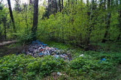 Lixo nas madeiras Foto de Stock