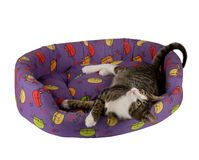Liying down cat. Cute cat laying down in his bed Stock Image