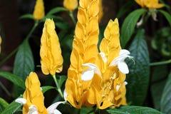 Lizak roślina zdjęcie stock